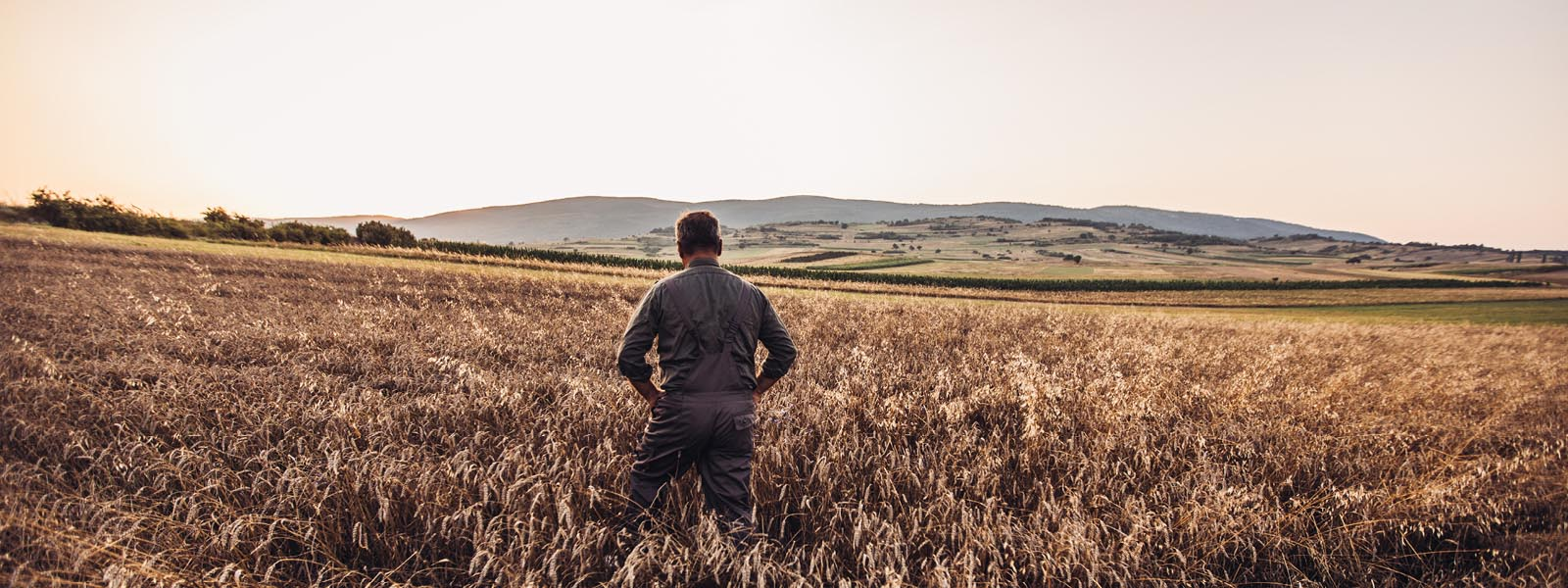 Landowner standing in a field surveing for pests